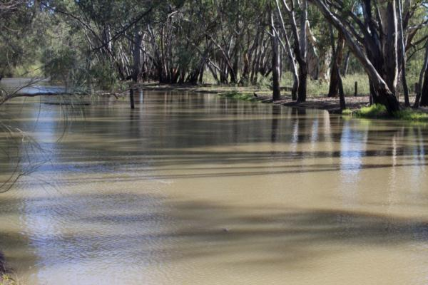 BWS101 Downstream; Note the Carp swimming on the surface