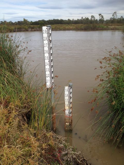 Very low level in the lake next to the bird hide - usually over 1.5m