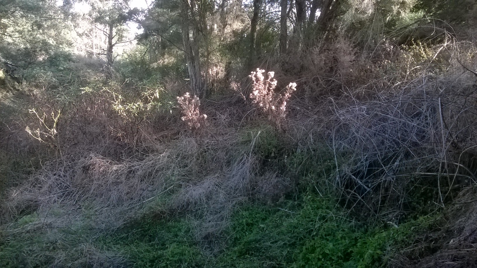 Weeds sprayed on south west bank