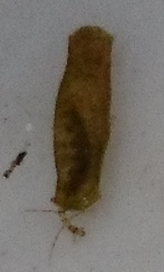 First Micro caddis found at the site