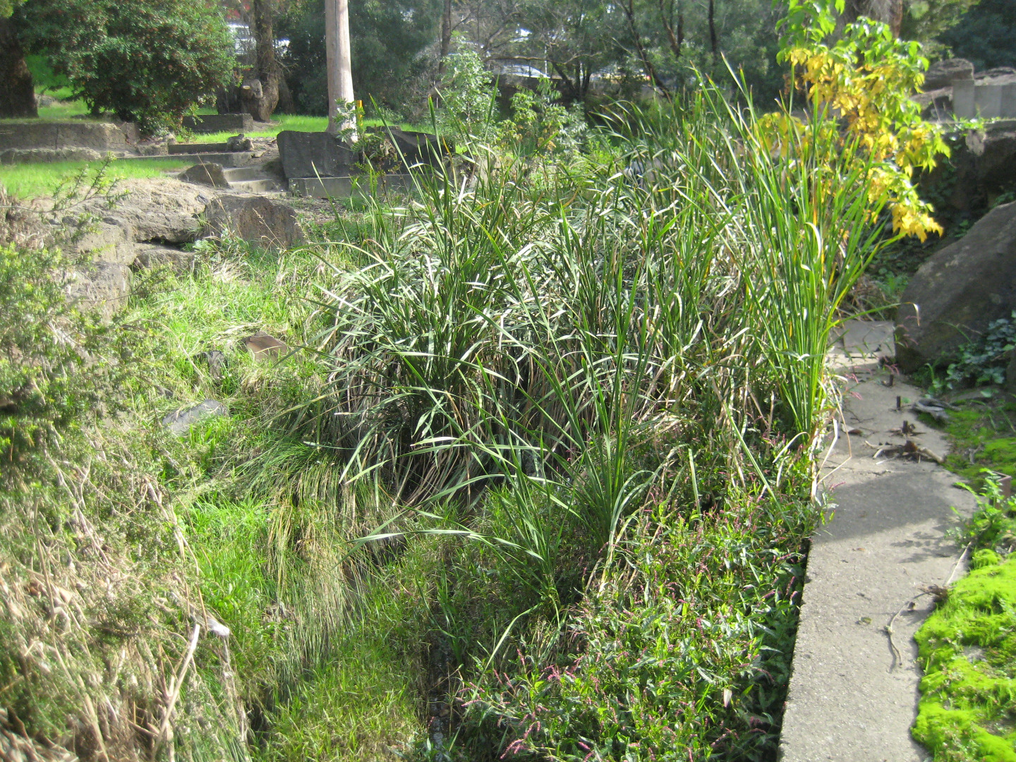 showing the vegetation obstructing flow at YDI838