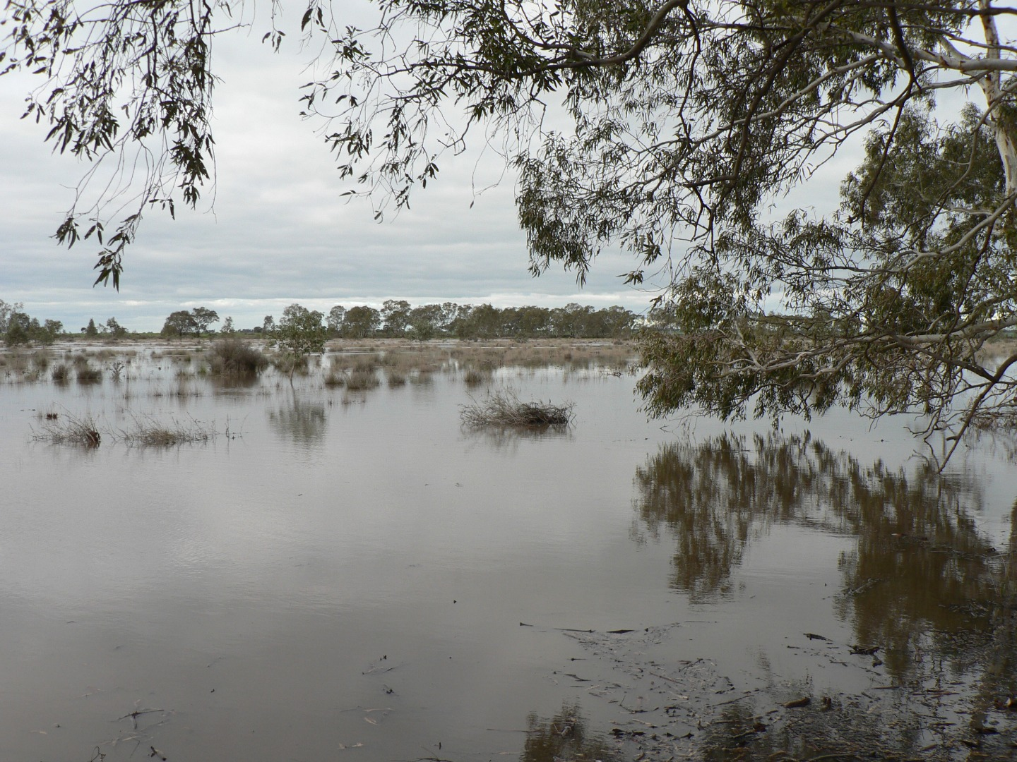 The east side of the redgum swamp has water photo's with a number of water birds already present.
