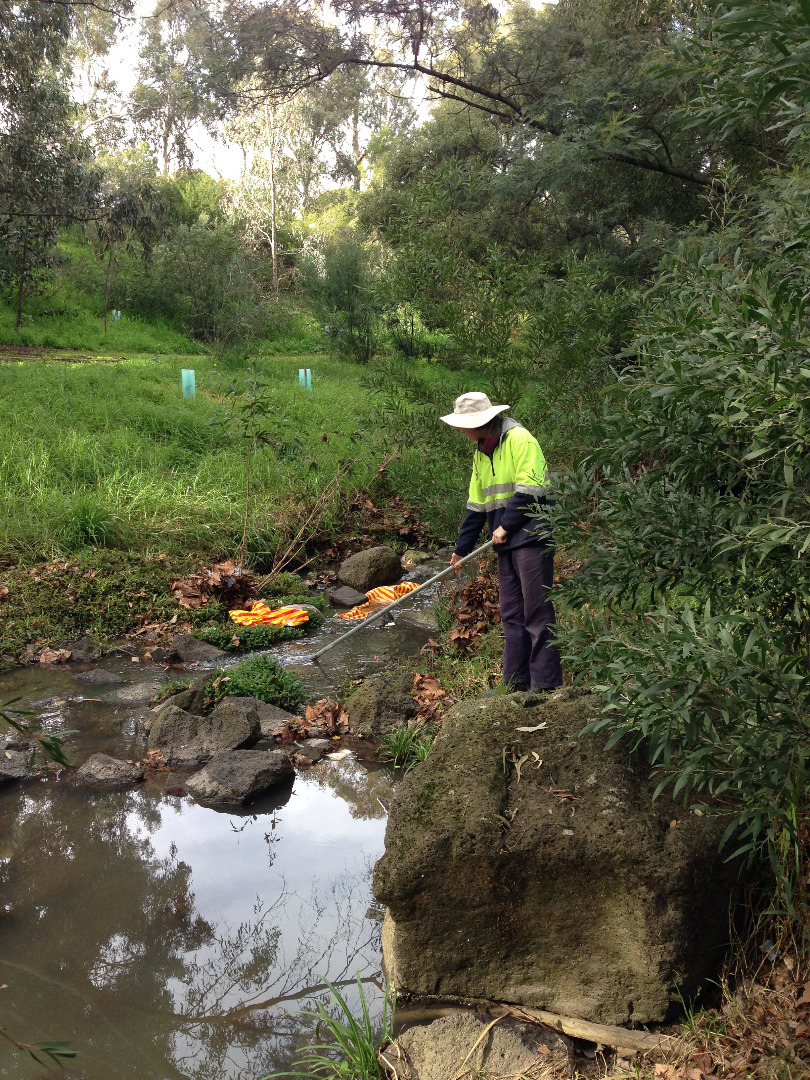 Green Army member collecting sample at sample site, just d/s of large pool