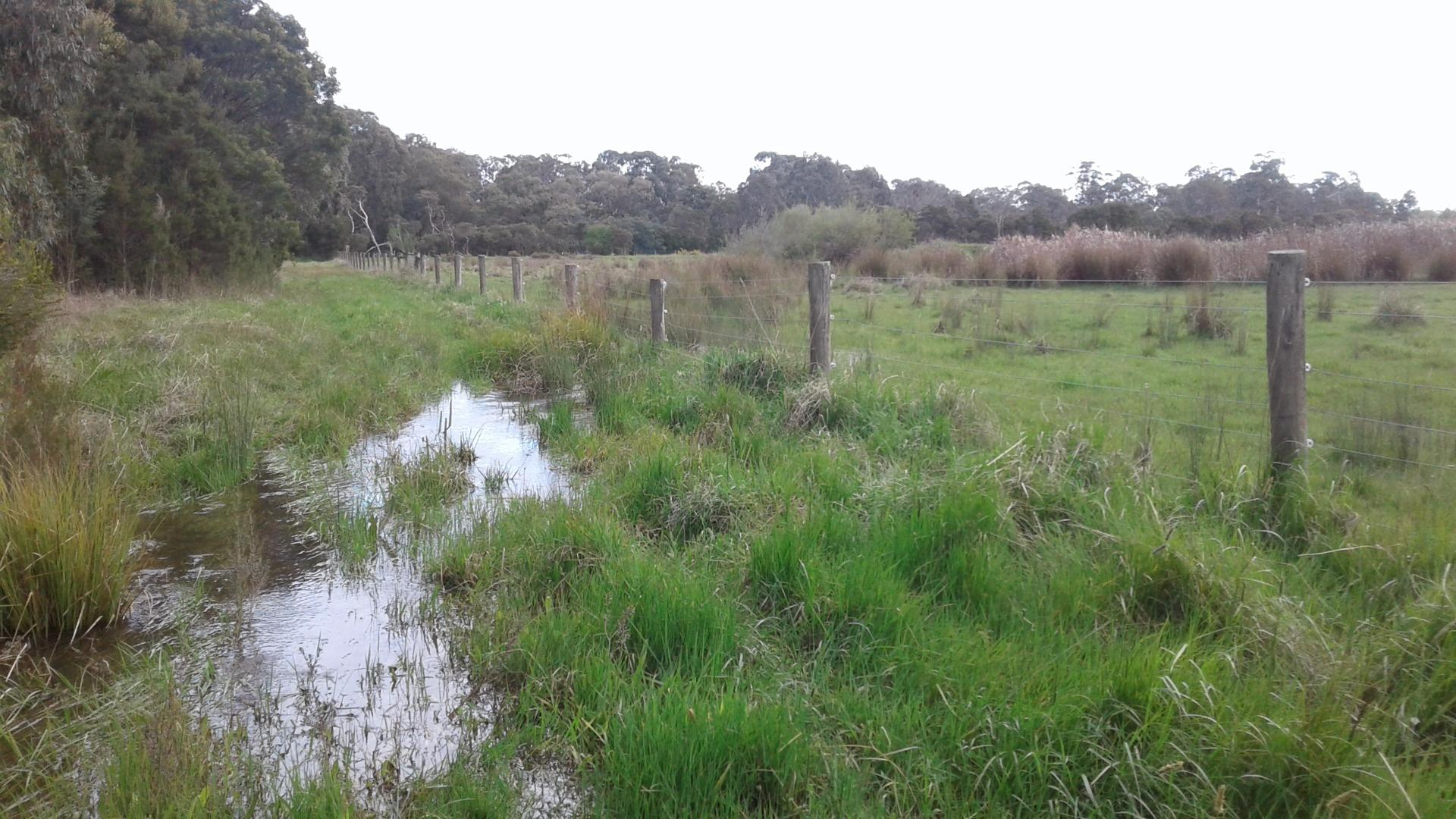 Water flowing over track to sampling site. Appeared to be coming from vegetation to the right which looks like it is surrounding a dam