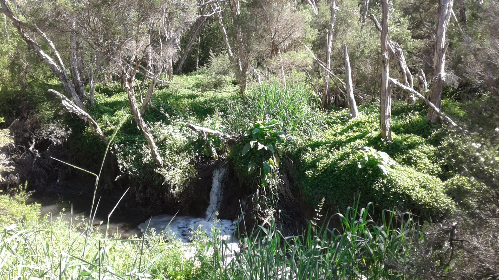 Instream to Dandenong Creek from Boral drainage showing 2 instreams and erosion between