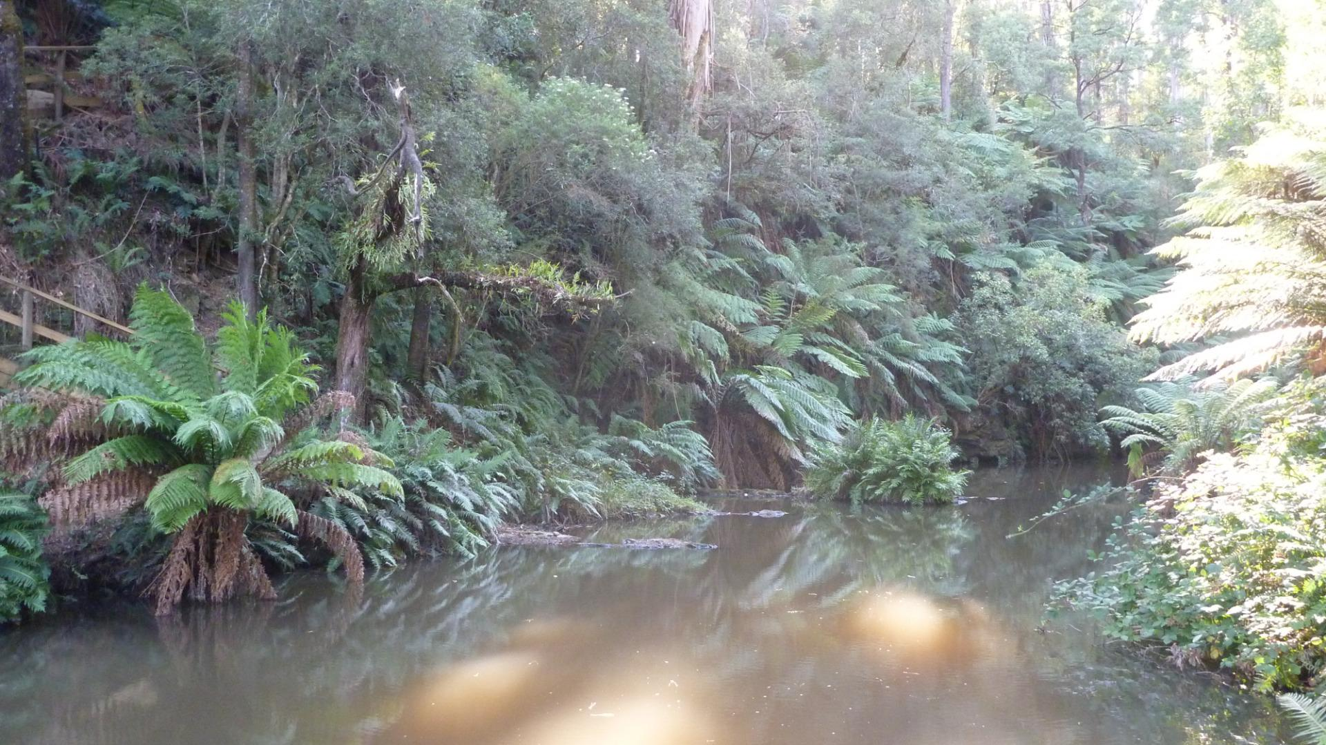 View upstream Morwell River Falls