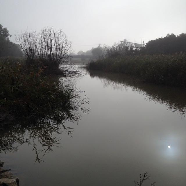 Creek towards freeway, back to normal level