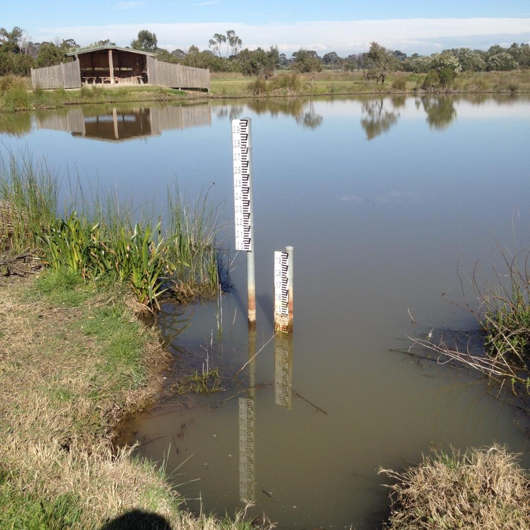 Low water level in the wetland but better than before