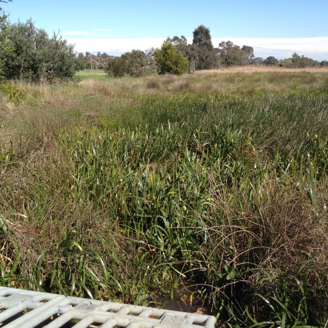 Lots of vegetation around the wetland outlet