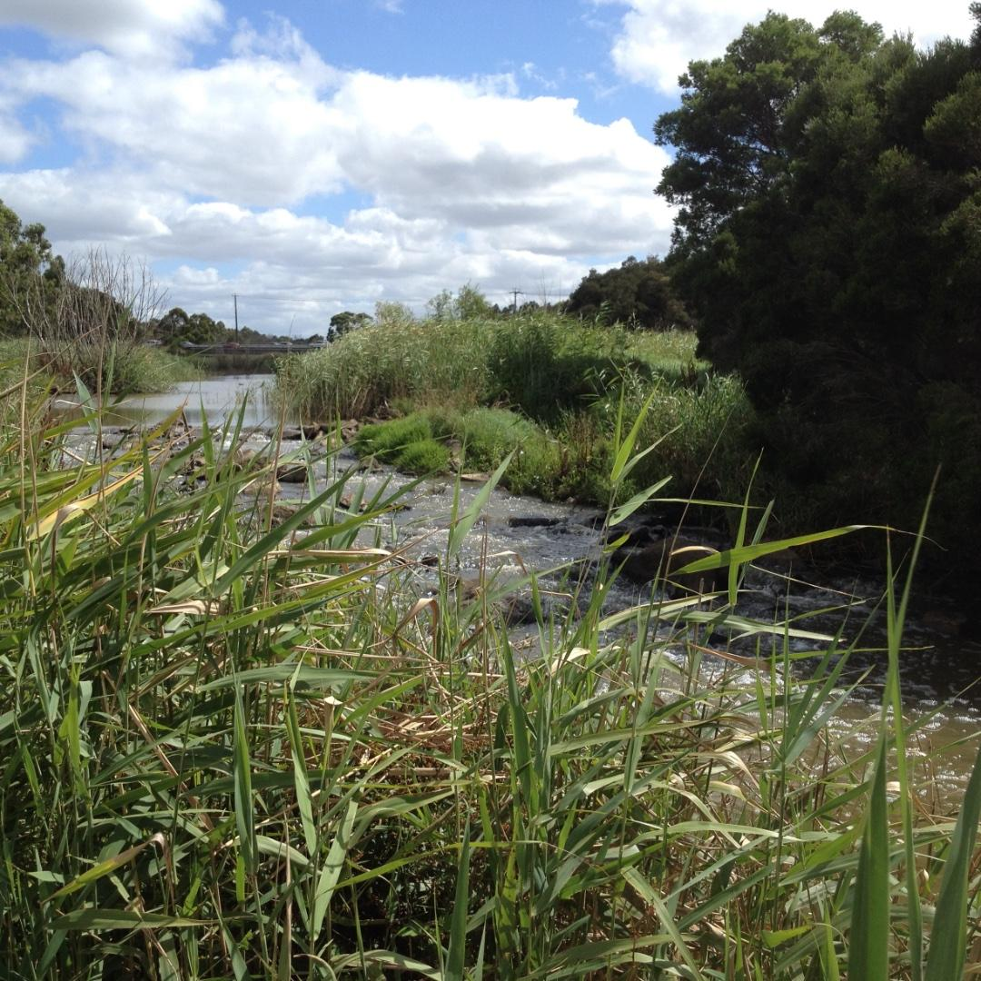 Looking upstream at the reinstated part of the creek near the inlet to the wetlands