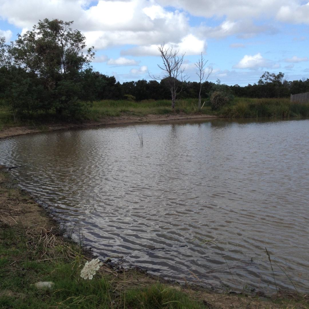 Wetland inlet lake after dredging and bank clearing
