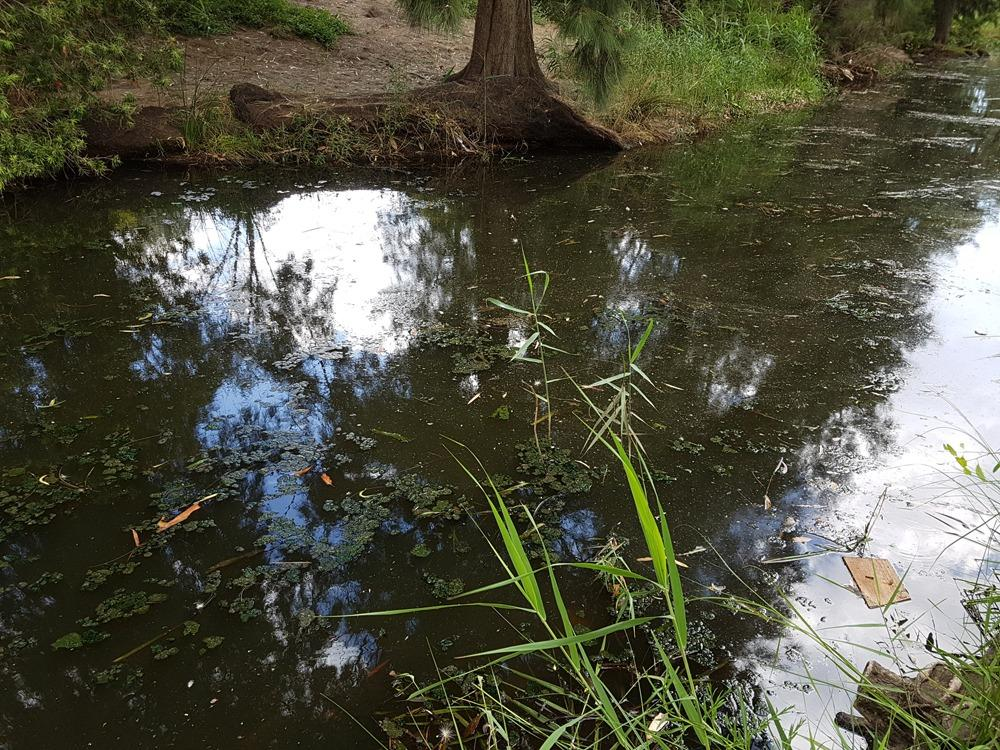 Photo of possible algae floating in the creek.