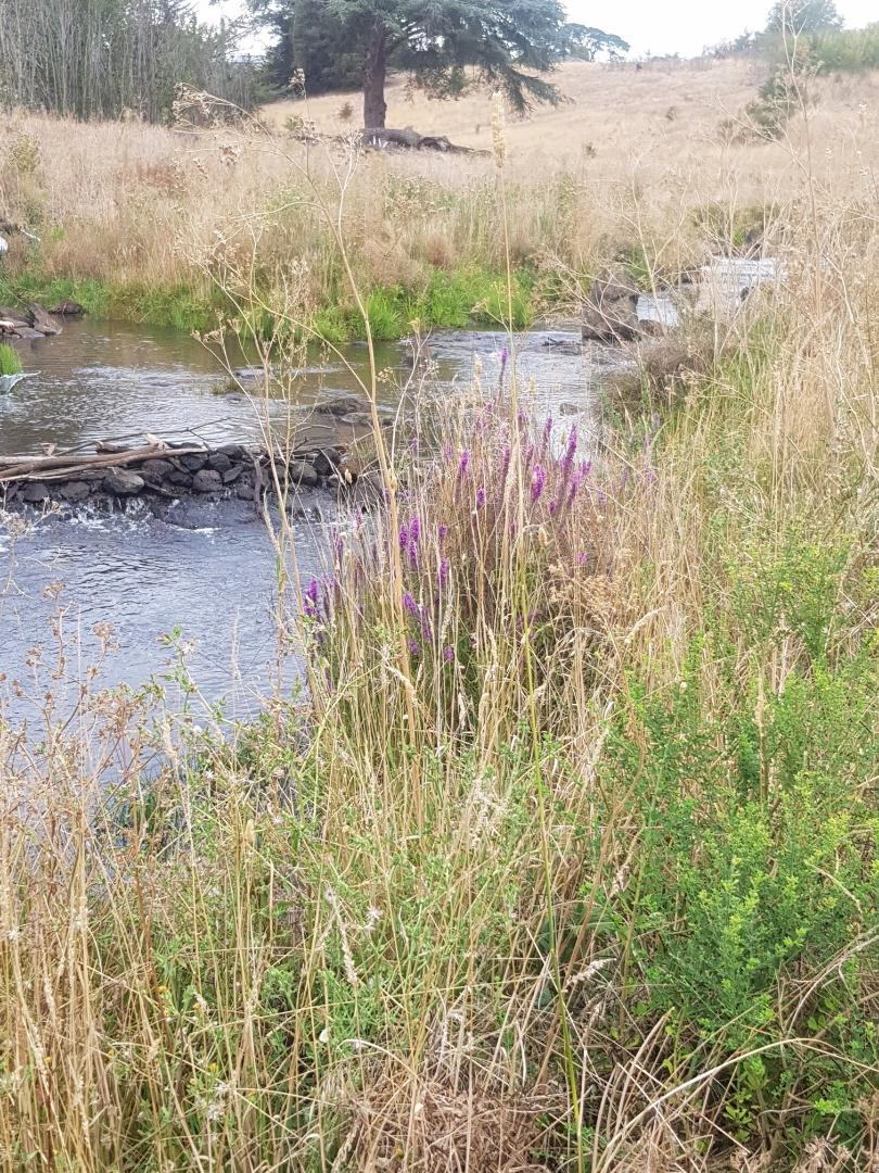 Banks protected by thick weed, grass and shrub coverage