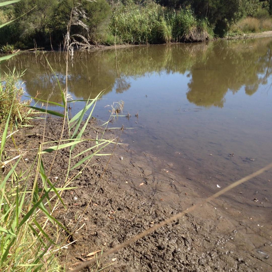 Low water level and sticky mud near the usual sampling spot