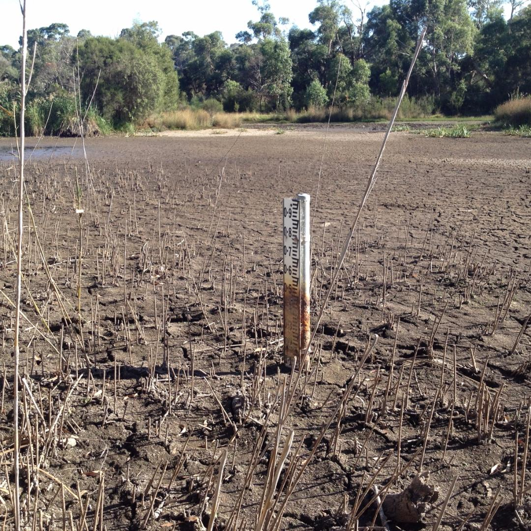 0.1m of mud only at the usual sampling site