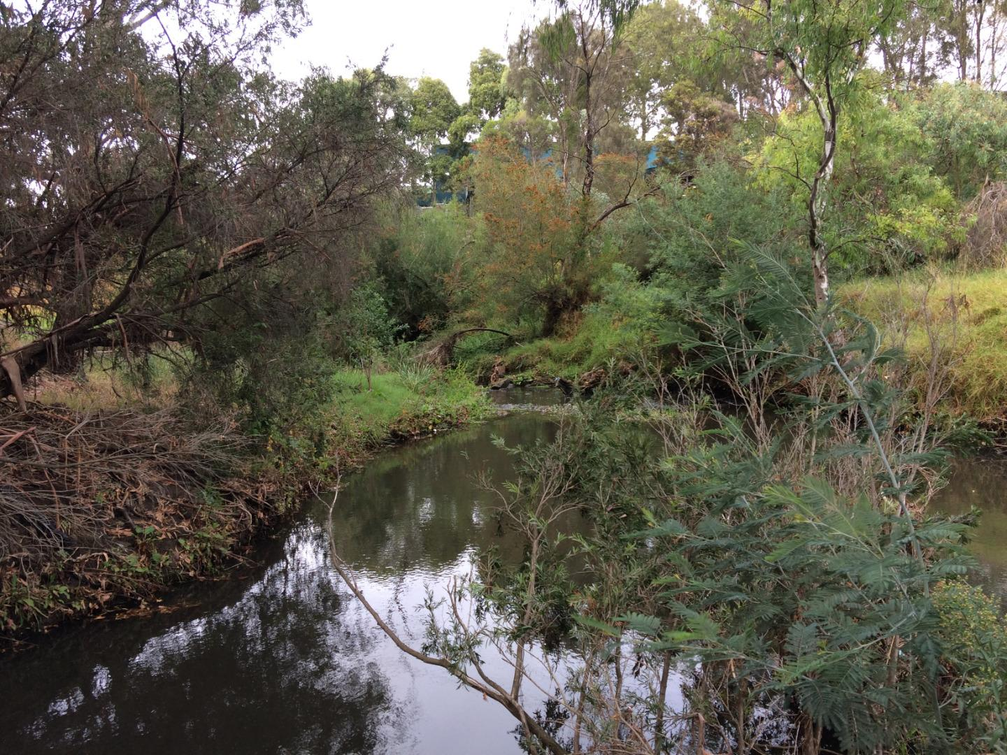 From Darebin Creek drain, looking downstream from Murry Road Bridge