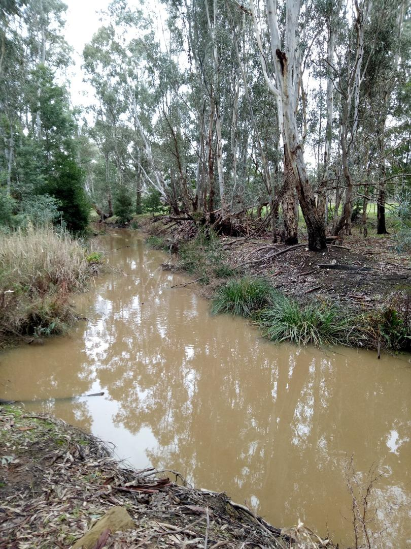 Effect of stormwater runoff, heavy rain events 29/06/2019. Note turbidity & colour.