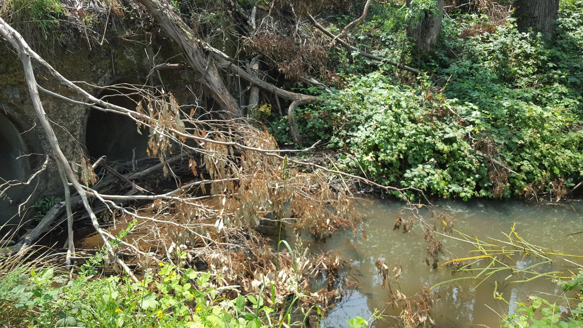 Appearance of site altered by fallen tree branches. Water appears cloudy in photo but is actually clear.