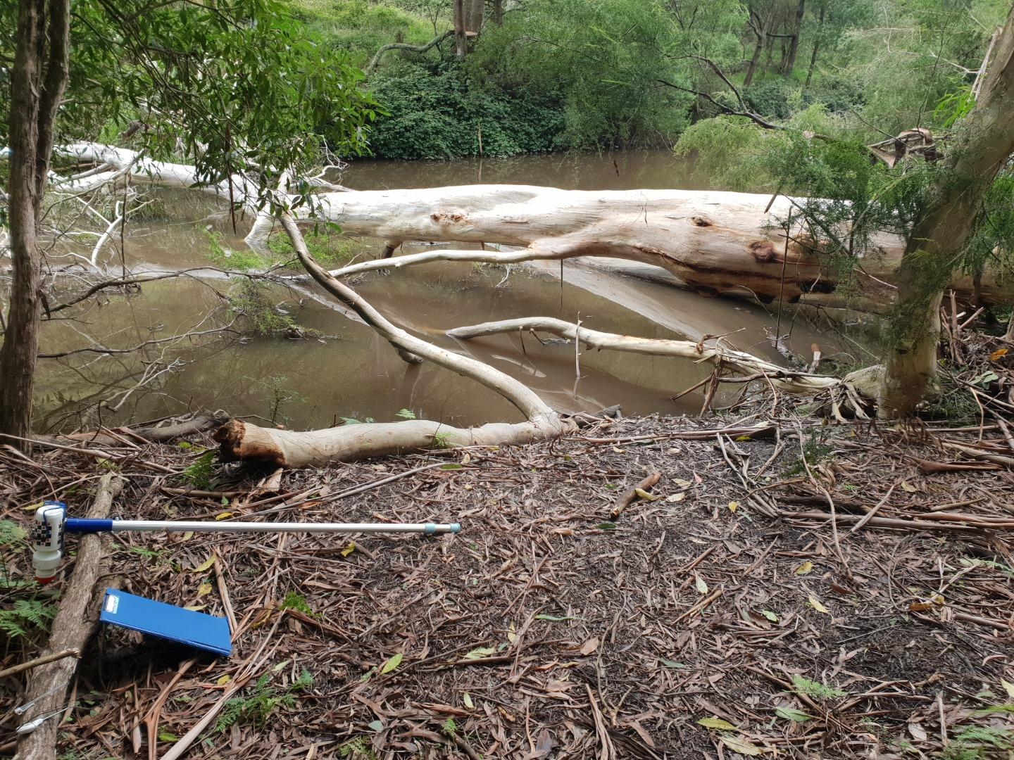 Fallen tree at sample site affecting water flow pattern