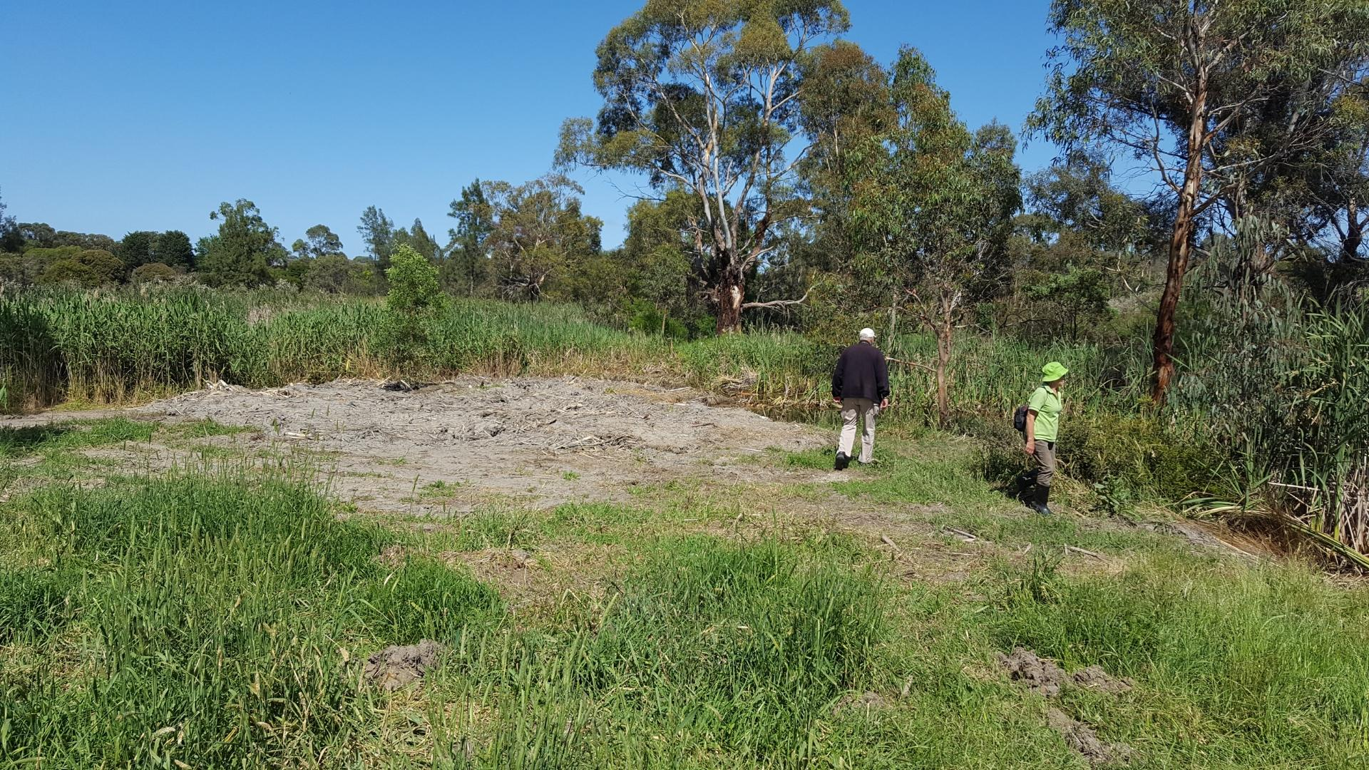 Clearing done at the deep pool at the drain entry to the wetlands