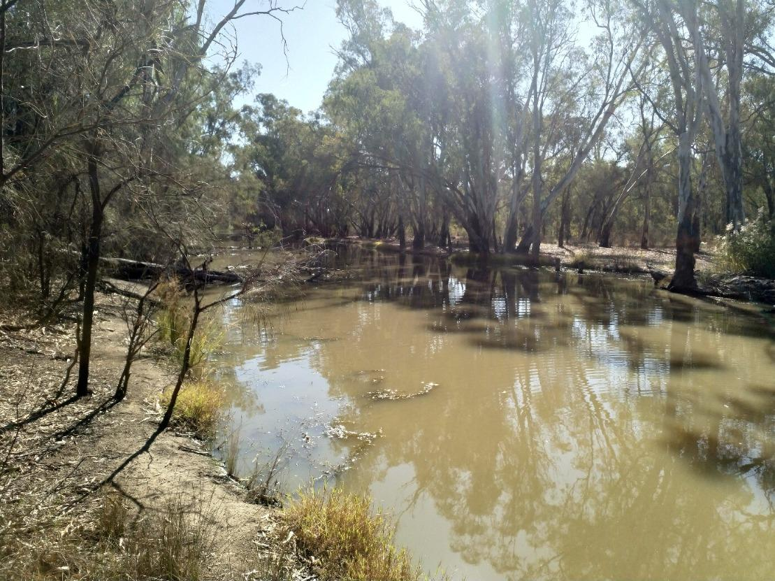 Murray River Off shoot Downstream