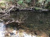 clear water on the bend at the big tree