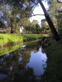Darebin creek looking upstream