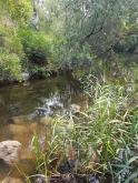 Creek when it was  tested 1.5 hours after resident report